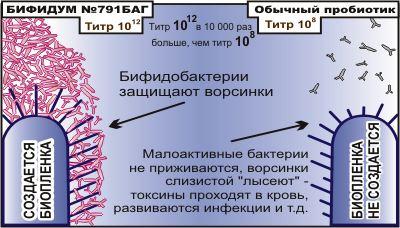Бифидобактерии - Бифидум 791 БАГ
